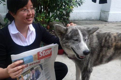 me the newspaper and the dog