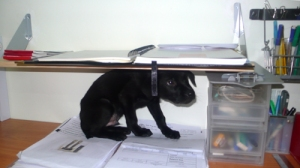 puppies-under-shelf-2